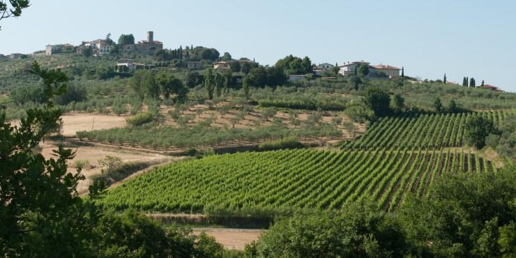Cabernet Sangiovese Vineyards